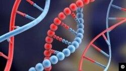 انسانی ڈی این اے(فائل)