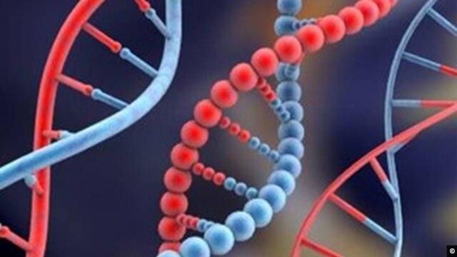Para ilmuwan mengatakan materi genetis DNA dapat membantu mengatasi meningkatnya kebutuhan ruang penyimpanan di era informasi ini. (Foto: Dok)
