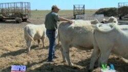 Texasda qurg'oqchilik, Texas drought