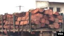 Angola madeira florestas camião