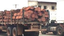 Suspensa exploração de madeira no Kuando Kubango - 1:15