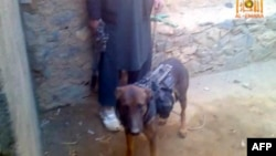 This video frame grab taken from a pro-Taliban website shows an alleged British military service dog being held on a leash by alleged Taliban insurgents, Feb. 6, 2014.