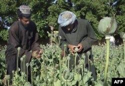 BMT: Afg'onistonda qoradoriga qarshi kurash ustuvor vazifaga aylansin