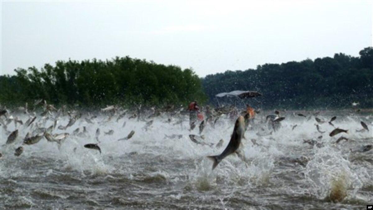 Asian carp utube concurrence