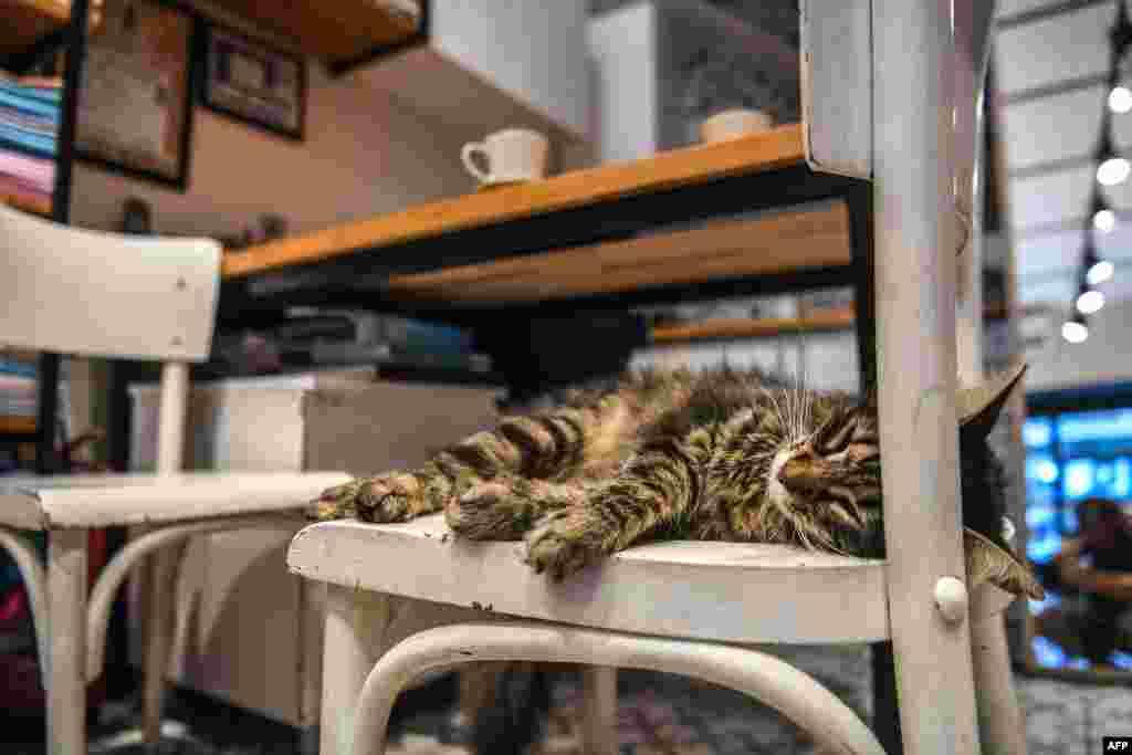 صندلی یک رستوران در استانبول بهترین مکان برای خوابیدن و استراحت این گربه در یک روز تابستانی گرم است.