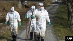 Yaponiyada yana zilzila, Fukushima atrofida jasadlar qidirilmoqda