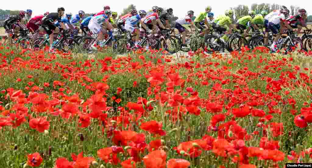 Para pebalap sepeda berlomba pada Giro d'Italia etape ke-11 sepanjang 227km dari Modena ke Asolo di Italia.