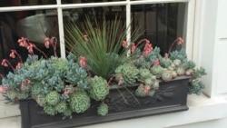 Quiz - Window Box Gardening