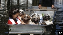 A woman and her dogs sit in a boat as they are evacuated from a flooded area in Bangkok October 26, 2011.