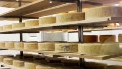 [타박타박 미국 여행 오디오] 우유와 치즈 그리고 인삼의 주, 위스콘신