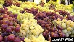 در تاکستان های ولایت هرات ۵۰ نوع انگور پرورش داده می شود