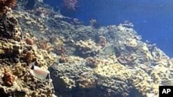 การสำรวจใต้ทะเลลึกนานาชาติพบว่าระบบนิเวศวิทยาใต้ท้องทะเลกำลังถูกคุกคาม