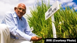 Indian Farmer Nekkanti Subba Rao