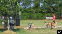 อาชีพรับจ้างพาสุนัขไปเดินเป็นธุรกิจส่วนตัวเล็กๆ ที่มีรายได้ดี