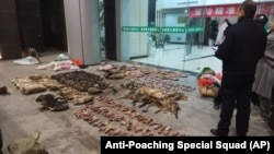 In this Jan. 9, 2020, photo provided by the Anti-Poaching Special Squad, police look at items seized from store suspected of trafficking wildlife in Guangde city in central China's Anhui Province.