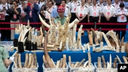 中国官员在北京参加一个销毁象牙制品的仪式 (2015年5月29日)