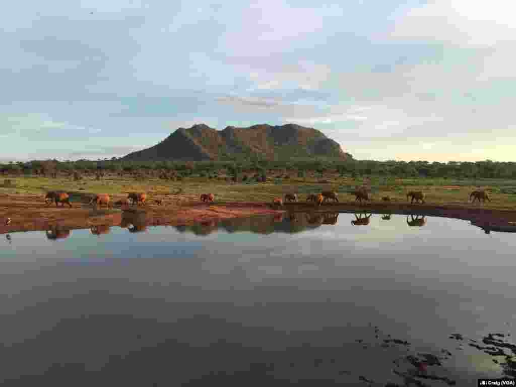 Elephants walk toward a watering hole near Tsavo East National Park, Voi, Kenya, April 20, 2016.