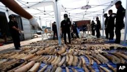 Giới chức hải quan Thái Lan đứng cạnh 4 tấn ngà voi tịch thu được tại cảng Bangkok, ngày 20/4/2015.