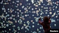 Una niña observa un enorme tanque lleno con medusas en el acuario de Vancouver, Canadá.