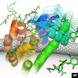 University of California, Irvine scientists built an electronic nano circuit and attached it to a lysozyme molecule, to track how it kills bacteria.