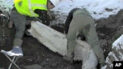 Colorado scientists have retrieved more than 600 Ice Age bones from an area which had once been an ancient mountain lake.