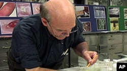 Lou Sorkin, an entomologist at the American Museum of Natural History in New York, studies bedbugs and even allows them to feed on him.