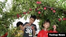 서울시 농업체험 프로그램 '그린투어'