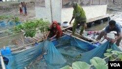 Floating farms of Bangladesh