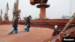 中國江蘇南通港的海關官員在檢查美國運來的高粱。(2020年2月11日)