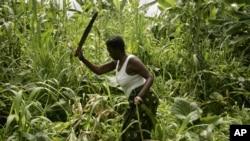 Moçambique tem que aumentar produção agrícola - FMI
