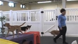 Pet Pampering Business Booms in US