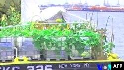 «Плавучий остров» в водах Нью-Йорка
