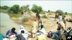 اوتھل کاجوہڑ، یہاں انسان اور جانور ایک ساتھ پانی پینے پر مجبور ہیں