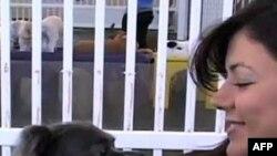 Amerikalılar'ın Evcil Hayvan Sevgisi Artıyor