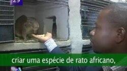 VOA60 Africa 16 Dez 2011 - Português