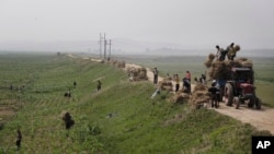 지난달 24일 북한 황해남도의 한 옥수수밭에서 주민들이 일하고 있다. (자료사진)
