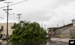 Downed trees and power lines are viewed near a school in downtown Los Angeles, Feb. 17, 2017. A major Pacific storm unleashed downpours and fierce gusts on Southern California.
