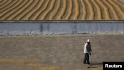 کارگری دانههای قهوه را در مزرعه قهوه «بنفيسيو» در سانتا روزا دلیما، ۵۰ کیلومتری گواتمالاسیتی خشک میکند – ۲۵ بهمن ۱۳۹۱ (۱۳ فوريه ۲۰۱۳)