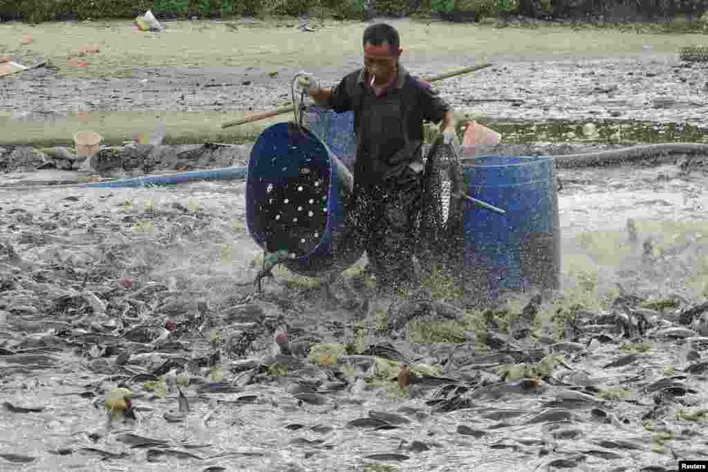 10일 중국 하이난성 하이코우 시의 오염된 연못에서 죽어가는 메기들을 한 인부가 처리하고 있다.