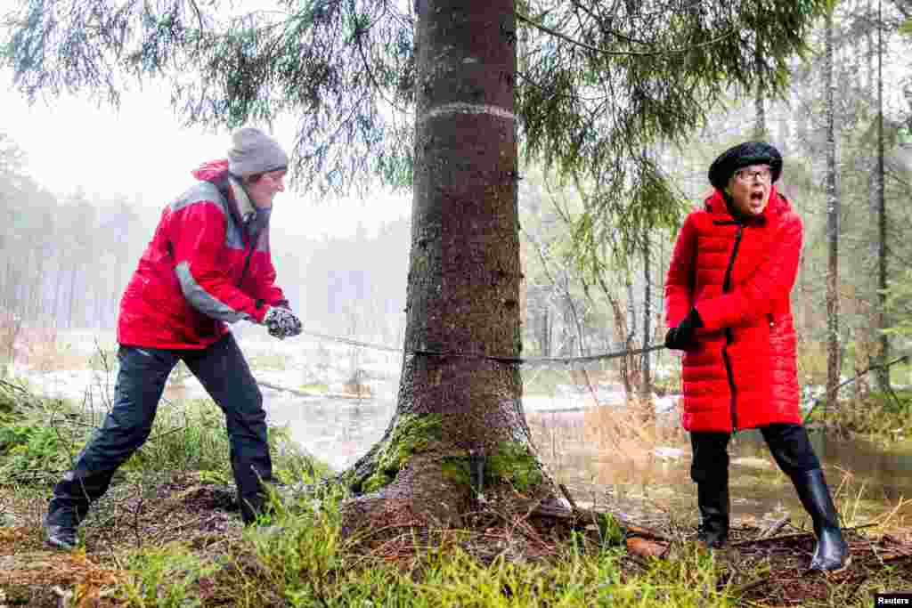 Mayor of Oslo Marianne Borgen and Lord Mayor of Westminster, Councillor Ruth Bush, saw a tree which will stand at Trafalgar Square in London for Christmas, in Olso, Norway.