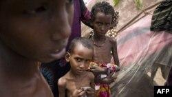 Afrika Buynuzunda ərzaq böhranı səngiyir