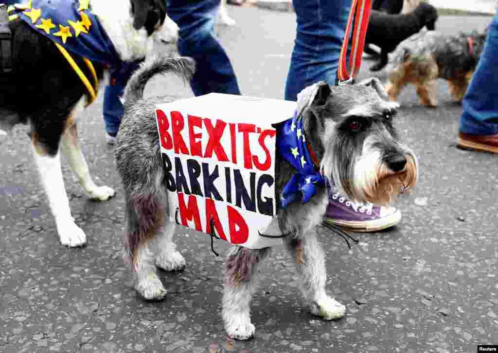 Londonda anti-brexit nümayişi