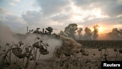 An Israeli soldier rides atop an armoured personnel carrier (APC) past dried sunflowers after crossing back into Israel from Gaza July 28, 2014.