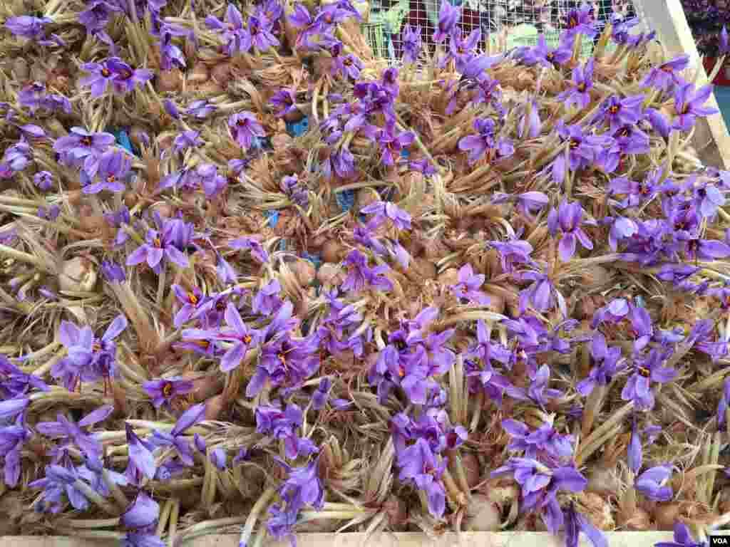 ولایت هرات بیشتر از ۹۰ درصد زعفران افغانستان را تولید میکند که قسمتی از محصول زعفران برداشتی در این ولایت به استرالیا، چین، ایتالیا، امریکا و امارات متحده عرب صادر میشود