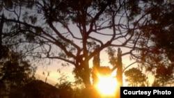 FILE - Sun shines through trees.
