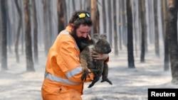 Adelaide wildlife rescuer Simon Adamczyk is seen with a koala rescued at a burning forest near Cape Borda on Kangaroo Island, southwest of Adelaide, Australia. (Credit: AAP Image/David Mariuz)