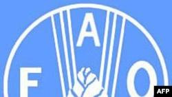 Liên Hiệp Quốc: Cúm gà hoành hành trở lại