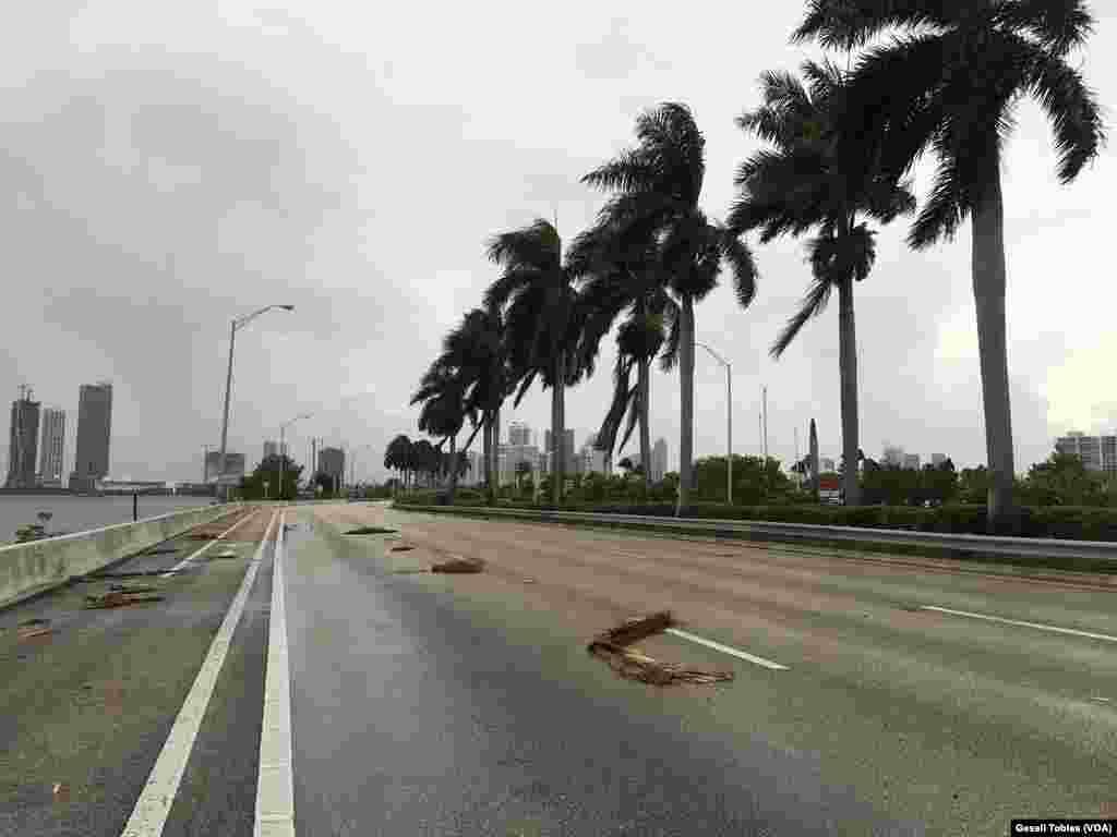 Palmeras caídas por los primeros vientos de Irma.