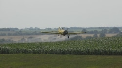 A crop duster sprays pesticide on a corn field