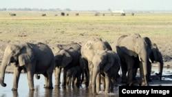 Ndovu wa Afrika Mashariki